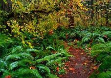 Jesień las tropikalny Fotografia Stock