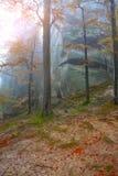 Jesień las w górach Obraz Royalty Free