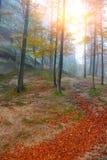 Jesień las w górach Obrazy Royalty Free