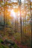 Jesień las w górach Fotografia Stock