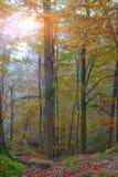 Jesień las w górach Zdjęcie Stock