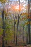 Jesień las w górach Obraz Stock