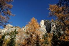 Jesień las w Juel dolinie Zdjęcia Royalty Free