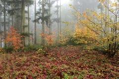 Jesień las w mgle Zdjęcia Royalty Free
