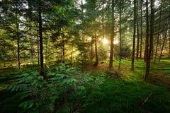 Jesień las w Netherland Fotografia Royalty Free