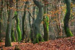 Jesień las w Netherland Zdjęcie Stock