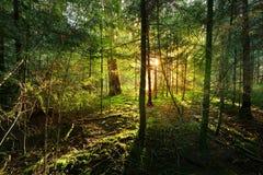 Jesień las w Netherland Obrazy Royalty Free