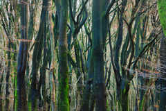 Jesień las w Netherland Obraz Royalty Free