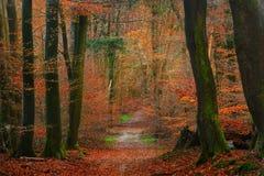 Jesień las w Netherland Fotografia Stock