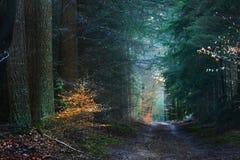Jesień las w Netherland Zdjęcia Stock