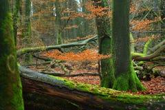 Jesień las w Netherland Zdjęcia Royalty Free