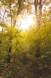 Jesień las w ogródzie botanicznym Obraz Royalty Free
