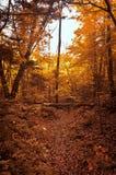 Jesień las w parku Zdjęcia Stock