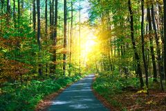 Jesie? las z footpath prowadzi w scen? Światło słoneczne promienie przez jesieni gałąź kosmos kopii obraz royalty free