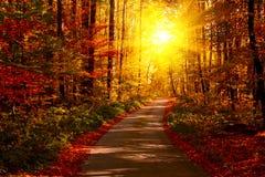 Jesie? las z footpath prowadzi w scen? Światło słoneczne promienie przez jesieni gałąź kosmos kopii zdjęcie royalty free
