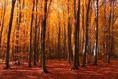 Jesie? las z footpath prowadzi w scen? jesieni? zbli?enie kolor t?a ivy pomara?czow? czerwie? li?ci kosmos kopii mi?kkie ogniska, obraz stock