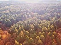 jesień lasowy Romania zmierzch obrazy royalty free