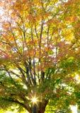 jesień lasowy Romania zmierzch Obrazy Stock