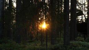 jesień lasowy Romania zmierzch Fotografia Stock