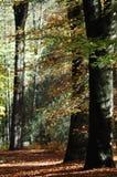 Jesień lasowy spacer Obraz Stock