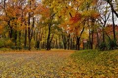 Jesień lasu aleja Obrazy Royalty Free