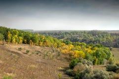 jesień lasu drzewa Obrazy Royalty Free