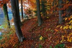Jesień lasu drzewa Zdjęcie Stock