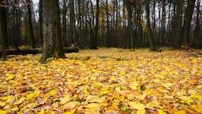 Jesień lasu park zdjęcie wideo