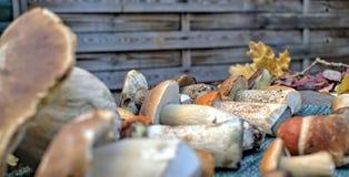 Jesień lasu pieczarki Zdjęcia Royalty Free