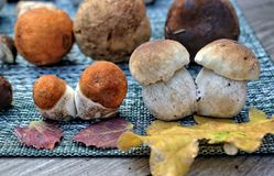 Jesień lasu pieczarki Zdjęcie Stock