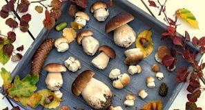 Jesień lasu pieczarki Obraz Royalty Free