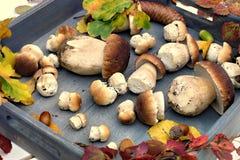 Jesień lasu pieczarki Fotografia Stock