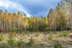 jesień lasu rosjanin Zdjęcie Royalty Free