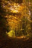 Jesień lasu tunel Obrazy Royalty Free