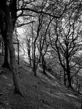 Jesień lasu zbocze Fotografia Royalty Free