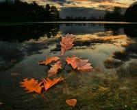 jesień leafs zmierzch Zdjęcia Royalty Free