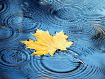Jesień liść. Zdjęcia Royalty Free