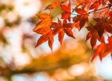Jesień liść, bardzo płytka ostrość Zdjęcie Royalty Free