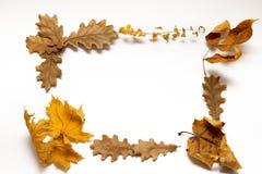 Jesień liść rama Zdjęcia Royalty Free