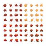 Jesień liścia set Zdjęcia Royalty Free