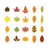 Jesień liście ustawiają, odizolowywali na białym tle, prosty kreskówki mieszkania styl, wektorowa ilustracja Zdjęcia Stock