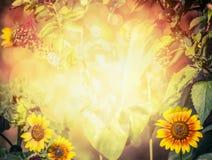 Jesień lub lato zamazujący natury tło z słonecznikami, liśćmi, starszą osobą i ulistnieniem z światłem słonecznym, Fotografia Royalty Free