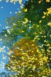 jesień lustro Fotografia Royalty Free