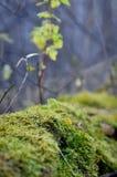 Jesień mech drzewo Zdjęcia Stock