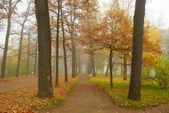 Jesień mglista Fotografia Stock