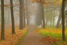 Jesień mglista Obraz Stock