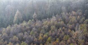 Jesień mglisty las Obrazy Royalty Free