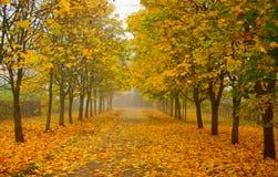 Jesień mglisty park Zdjęcie Royalty Free