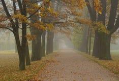 Jesień mglisty ranek przy Aleksander parkiem Obrazy Stock