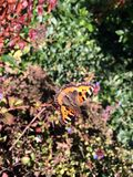 Jesień motyl (60216195) Obrazy Royalty Free